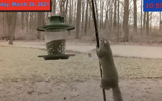 Squirrel having some fun on my Bird Cam!